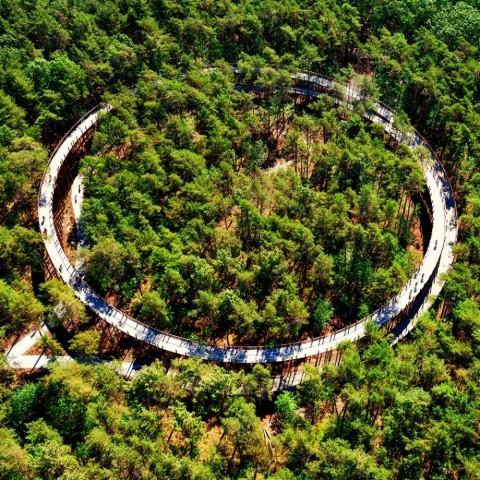 'Fietsen door de Bomen' wint Dezeen award voor beste 'Architectuur - Infrastructuurproject'